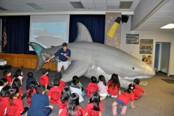 Collegewood first graders got a close-up look at life-size inflatable great white shark during the Aquarium of the Pacific education assembly.   Photo Credit: Kelli Gile