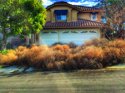 Photo courtesy of Facebook A driveway covered with tumbleweeds greeted this Chino Hills' homeowner.