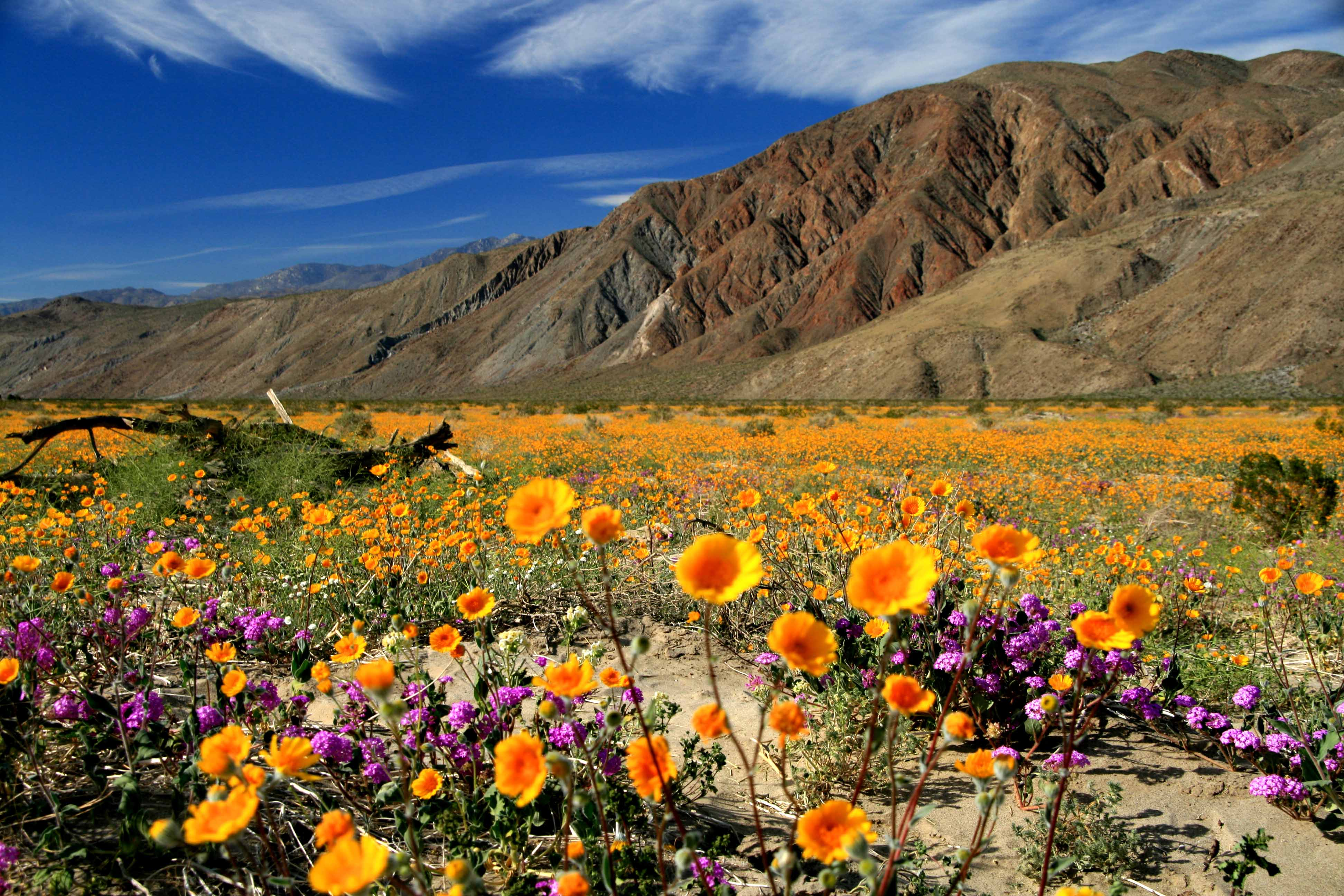 Great Places To See Southern California In Bloom This Spring Abcpr Media Group Community News