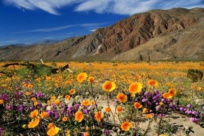 Photo courtesy:  sandiego.org Anza-Borrego State Park