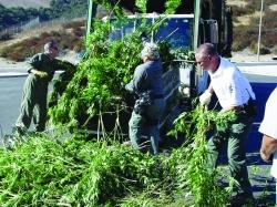 9-26-marijuana-raid-pic